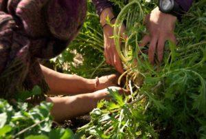 permaculture-garden-hands-down
